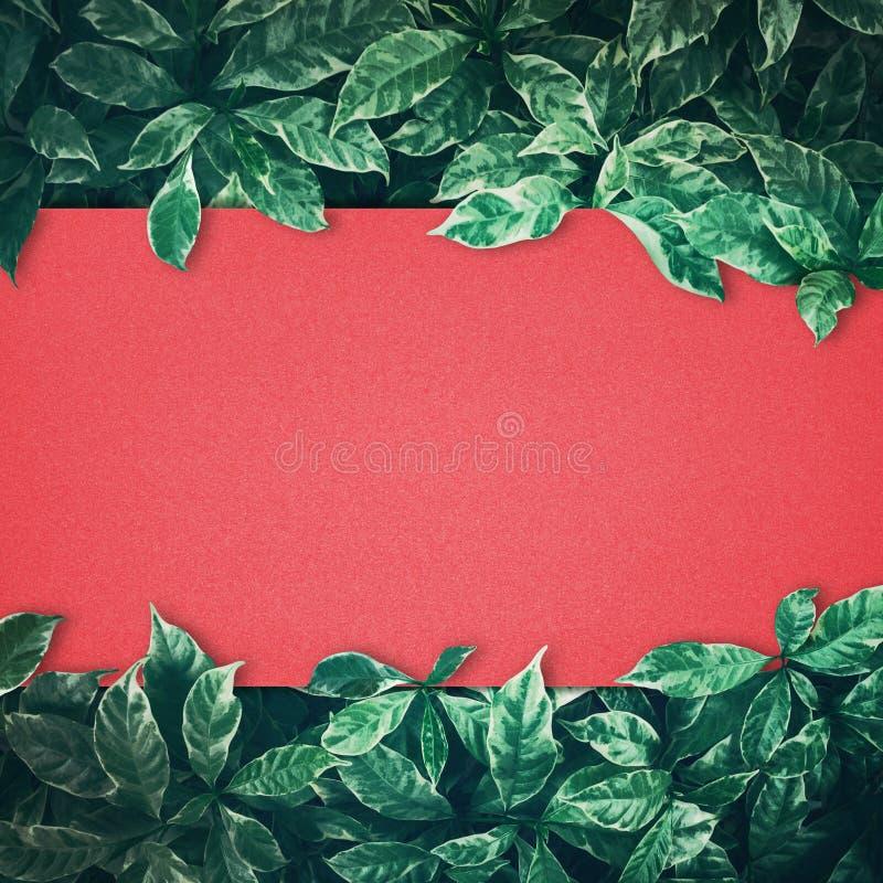 El verde deja diseño del fondo con el papel rojo Endecha plana Visión superior imagenes de archivo