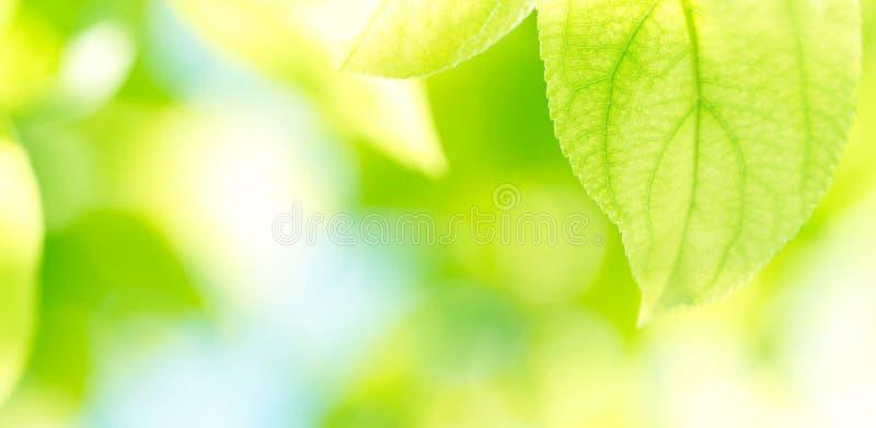 El verde deja el fondo foto de archivo