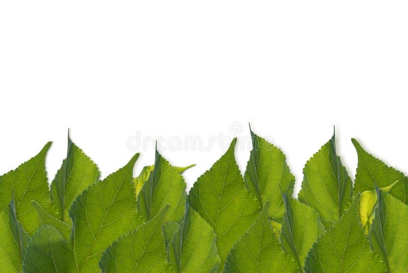 El verde deja el marco del fondo, blanco, espacio para el contenido del texto foto de archivo
