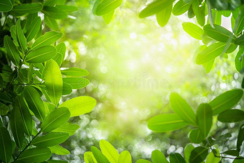 El verde deja el fondo como marco imagenes de archivo
