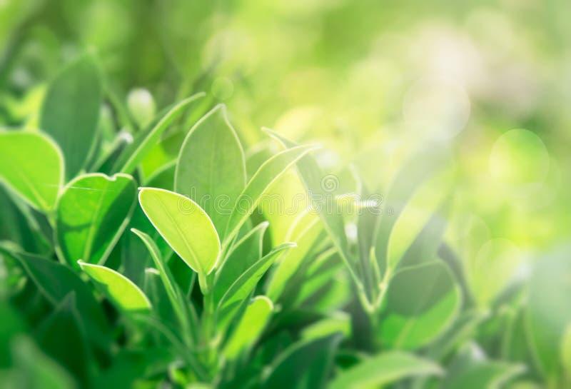 El verde deja el fondo, disposición creativa hecha de hojas verdes Endecha plana ilustración del vector