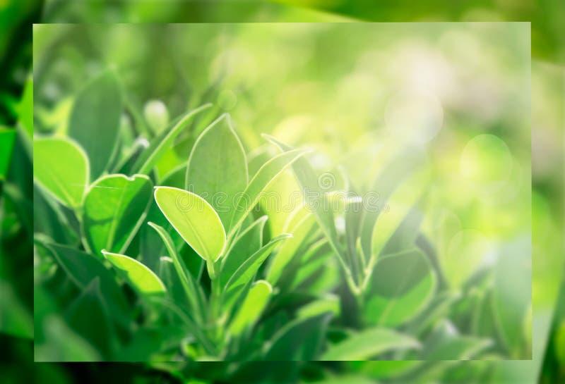 El verde deja el fondo, disposici?n creativa hecha de hojas verdes Endecha plana libre illustration
