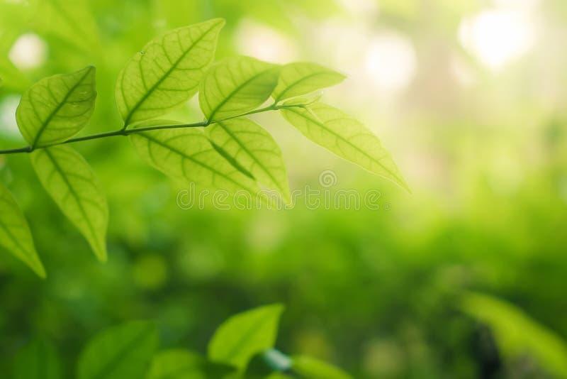 El verde deja el fondo en bokeh borroso de la hoja del verdor en verano del jardín con el espacio de la copia foto de archivo