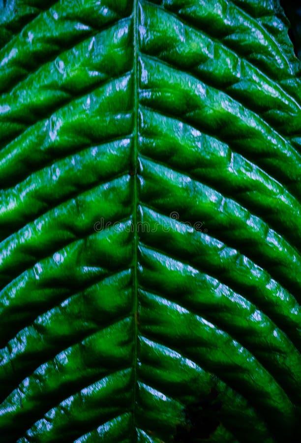 El verde deja el fondo El verde deja oscuridad del tono del color en la mañana fotografía de archivo