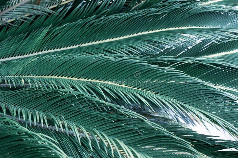 El verde deja el fondo El verde deja oscuridad del tono del color en la mañana Planta tropical, ambiente, naturaleza del concepto foto de archivo libre de regalías