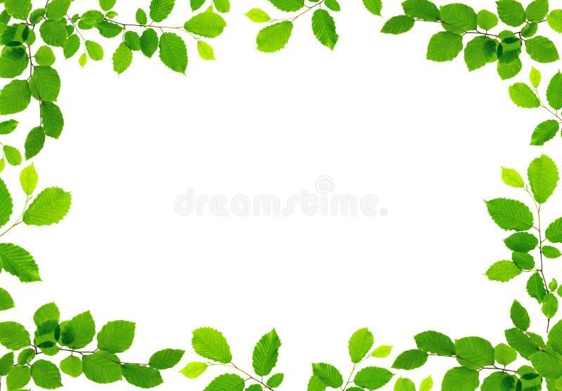 El verde deja la frontera aislada en el fondo blanco fotografía de archivo libre de regalías