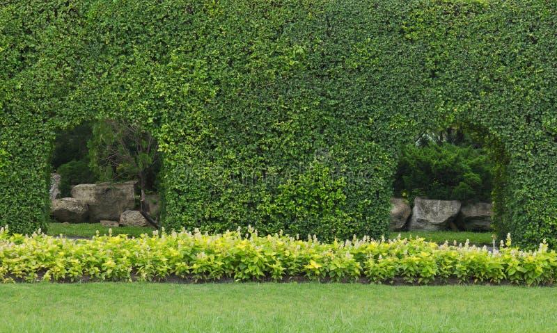El verde deja la pared en el jardín fotos de archivo libres de regalías
