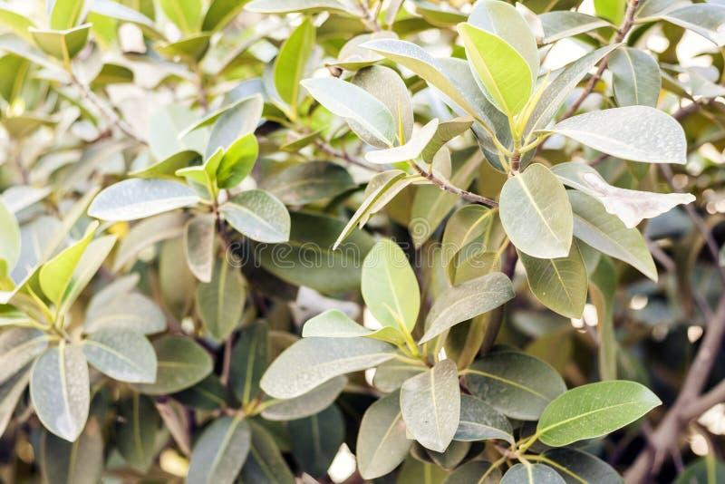 """El verde deja la textura para arbusto de la planta del †del diseño del contexto """"en la calle de Catania, Sicilia, Italia foto de archivo"""