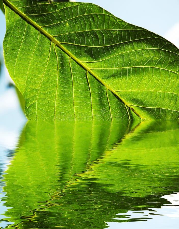 El verde deja textura fotografía de archivo libre de regalías