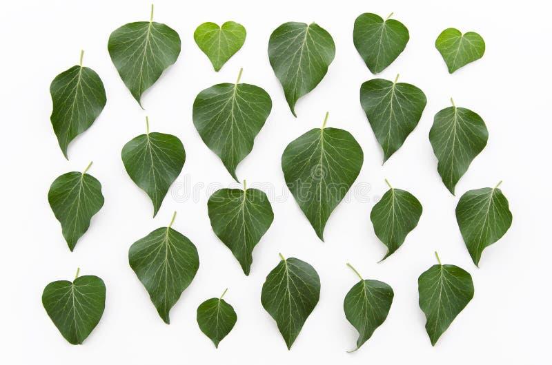 El verde deja textura del estampado de flores Endecha plana, visión superior Fondo de la hoja foto de archivo libre de regalías