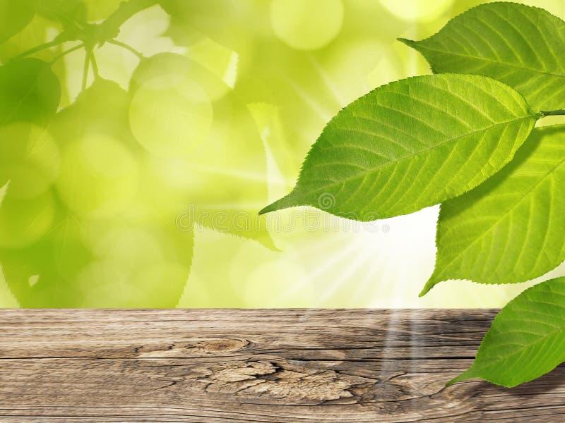 El verde del fondo de la primavera deja la tabla de madera y Sun foto de archivo libre de regalías
