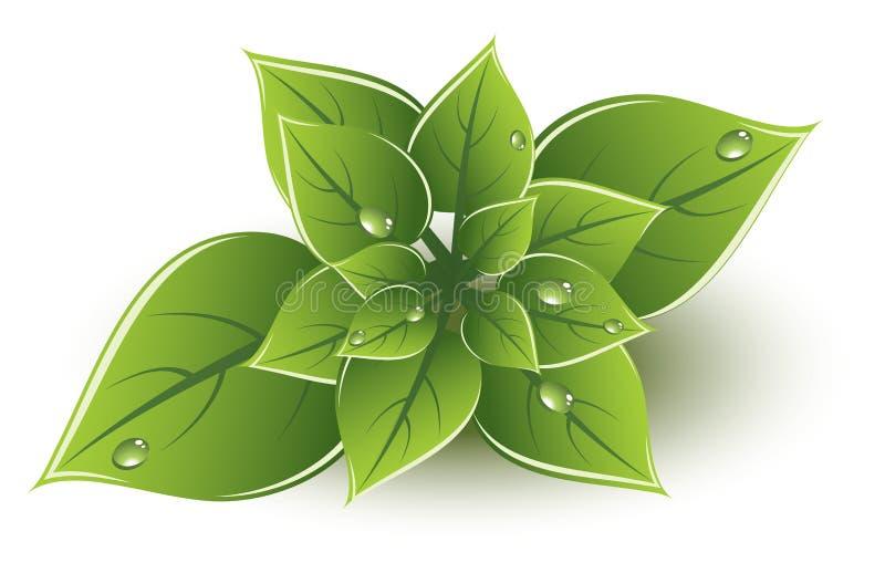 el verde del vector deja diseño del eco stock de ilustración