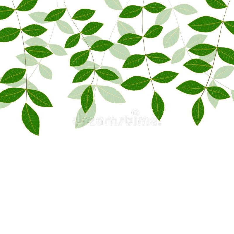 El verde fresco natural de la primavera se va en el fondo blanco ilustración del vector