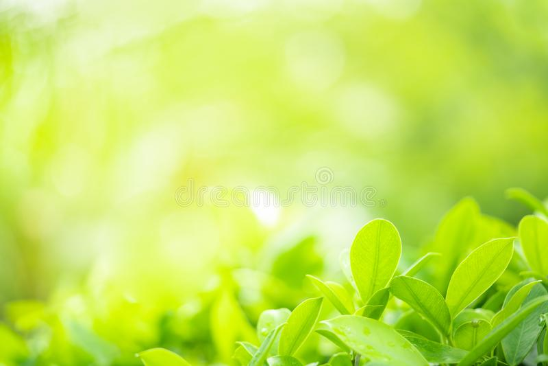El verde joven deja el fondo con efecto defocused fotos de archivo libres de regalías
