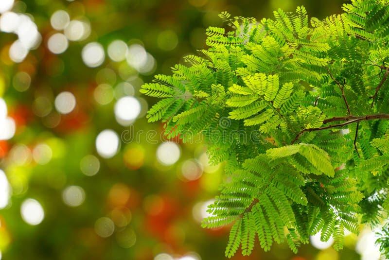 El verde natural se va con la primavera del bokeh de la falta de definición o el fondo del verano fotos de archivo