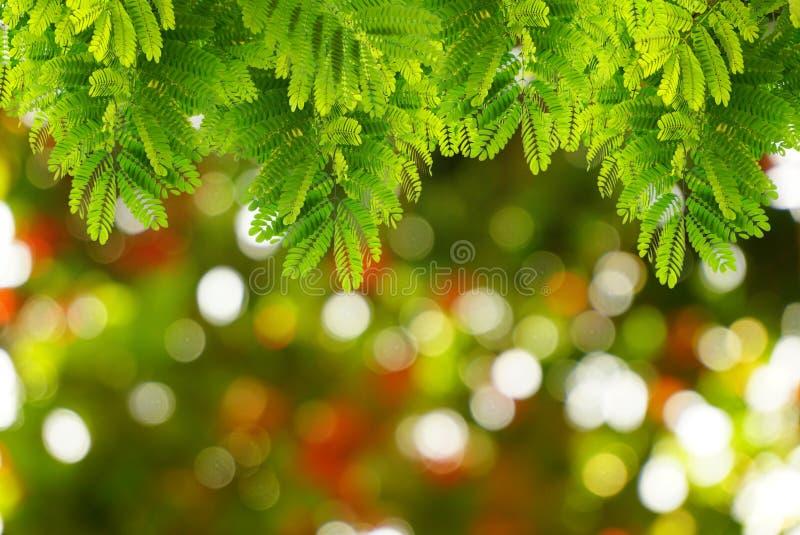 El verde natural se va con la primavera del bokeh de la falta de definición o el fondo del verano foto de archivo