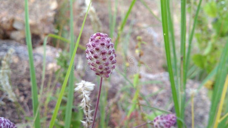el verde púrpura deja las flores fotos de archivo libres de regalías