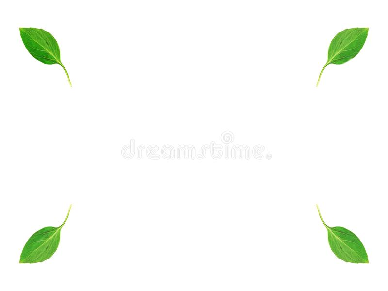 El verde se va en las esquinas en el fondo blanco, copia-espacio de centro fotos de archivo libres de regalías