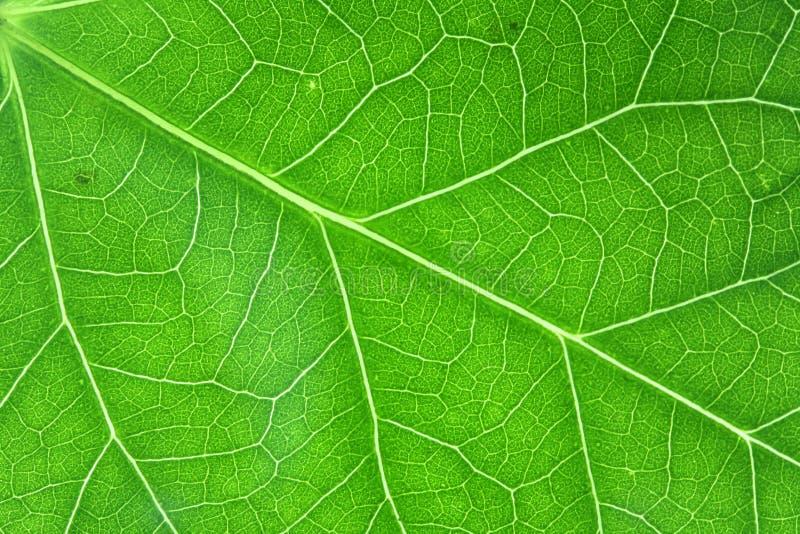 El verde vetea horizontal fotografía de archivo