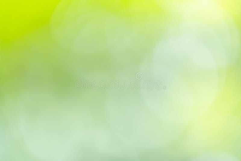 El verdor del extracto empañó el fondo con el bokeh de la belleza bajo luz del sol en verano imagen de archivo