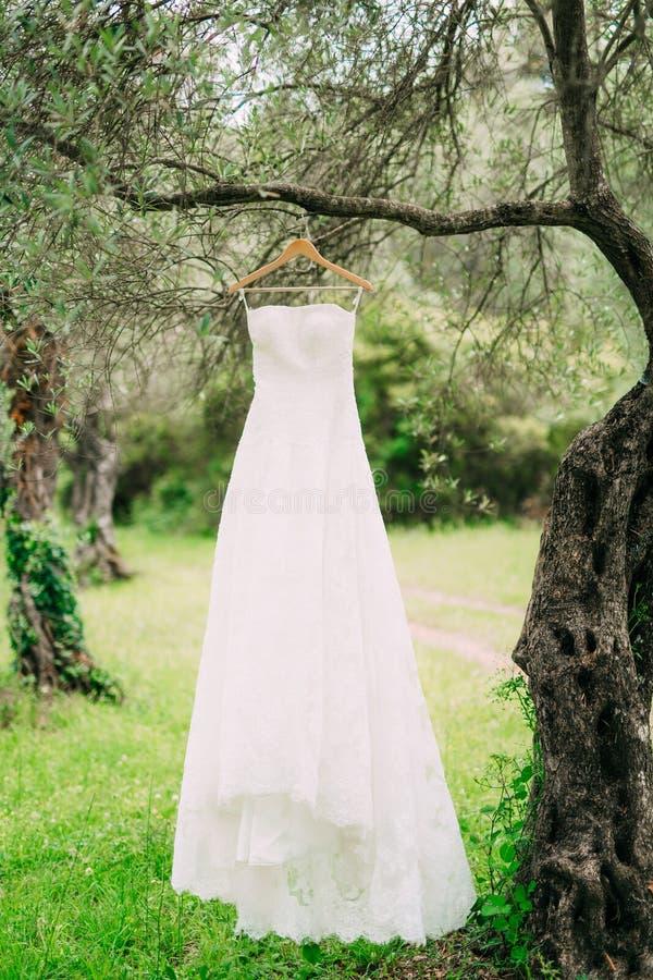 El vestido del ` s de la novia cuelga en una suspensión en un olivo collecting fotografía de archivo libre de regalías