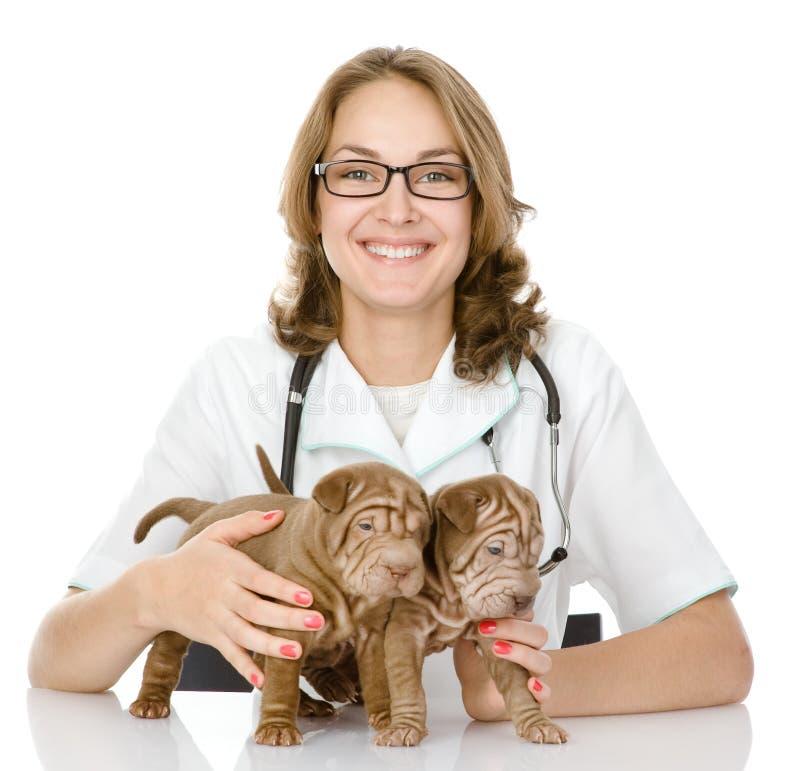 El veterinario abraza el perro de dos perritos del sharpei foto de archivo libre de regalías