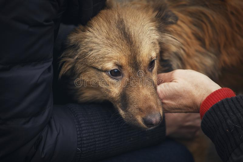 El veterinario examina el perro sin hogar La mano de la ayuda animal fotografía de archivo