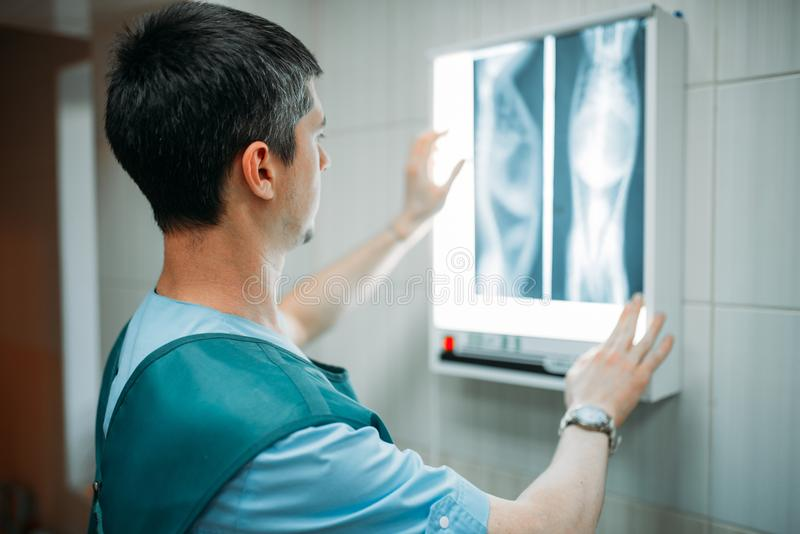 El veterinario mira la radiografía, clínica veterinaria foto de archivo libre de regalías