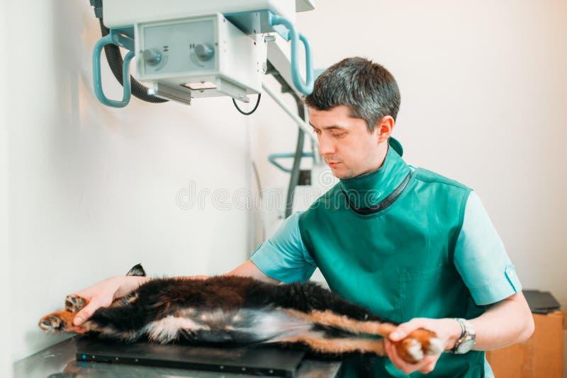 El veterinario toma la radiografía, clínica veterinaria foto de archivo