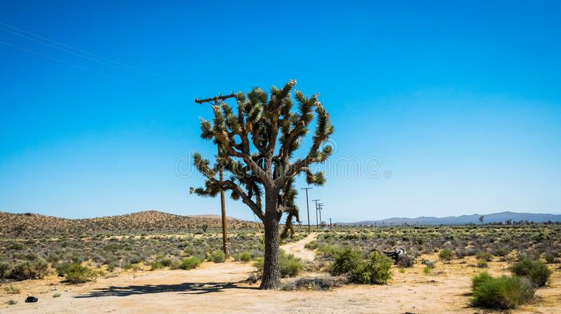 El viajar en América El desierto de Mojave en los Estados Unidos imágenes de archivo libres de regalías