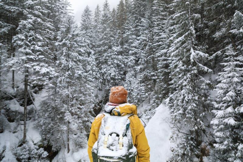 El viajero en bosque imagen de archivo