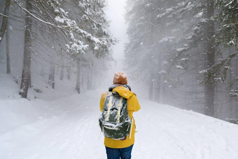 El viajero en bosque del invierno fotos de archivo