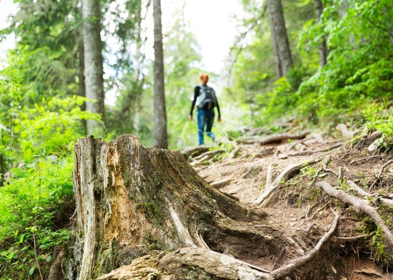 El viajero está caminando en el bosque fotos de archivo libres de regalías