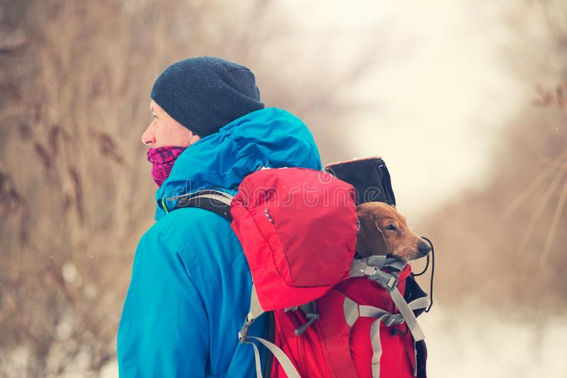 El viajero lleva adentro su mochila un pequeño perro divertido fotografía de archivo