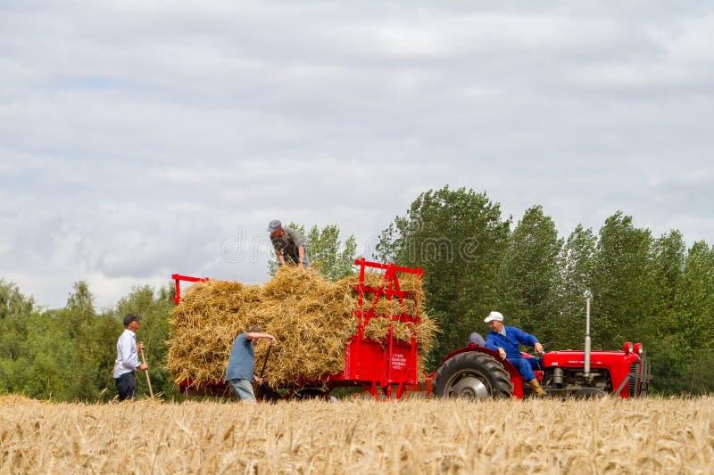 El viejo vintage Massey Ferguson y el remolque en cosecha colocan fotografía de archivo libre de regalías