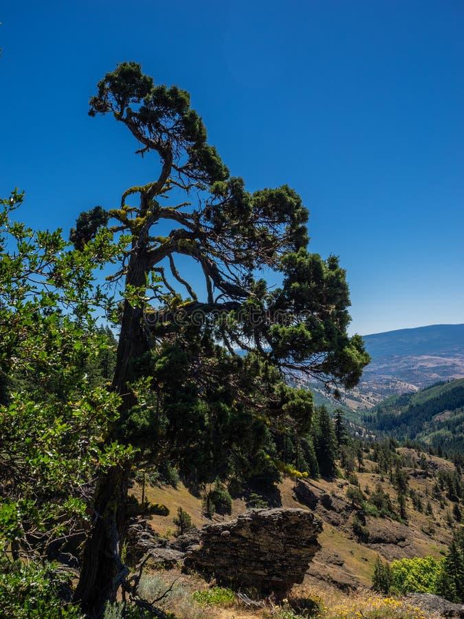 El viento barrió el árbol en las montañas fotos de archivo libres de regalías