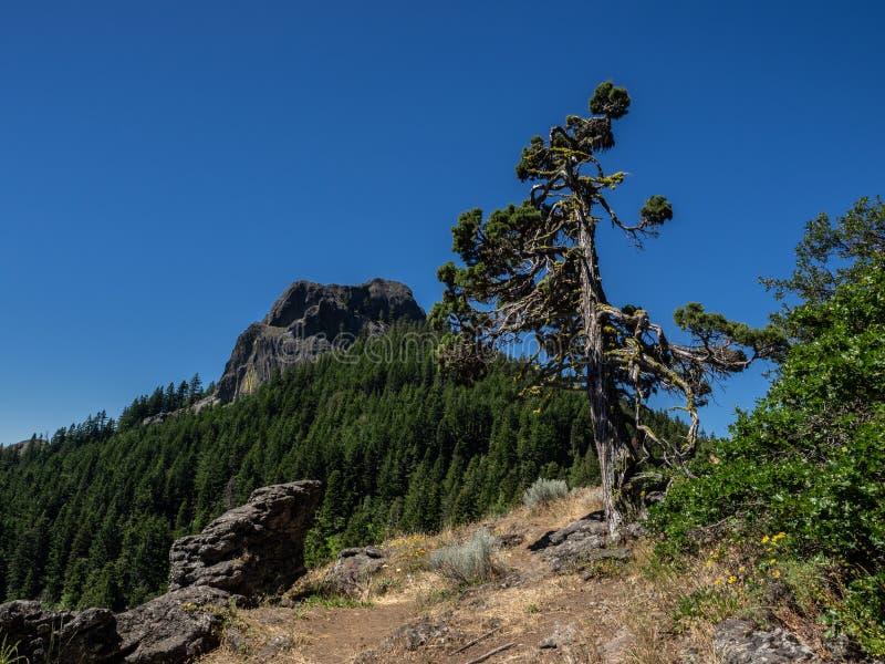El viento barrió el árbol en las montañas foto de archivo libre de regalías