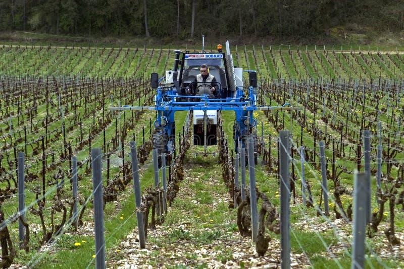 El vinatero conduce un tractor en el viñedo, Francia imagen de archivo