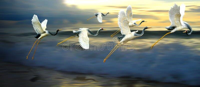 El volar al nuevo horizonte imagen de archivo libre de regalías