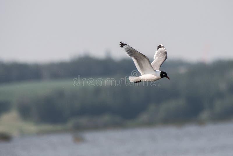 El volar arriba sobre el lago fotos de archivo libres de regalías