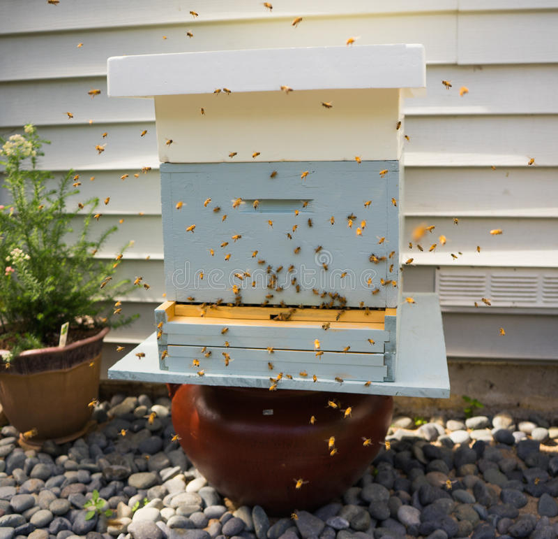 El volar de las abejas foto de archivo