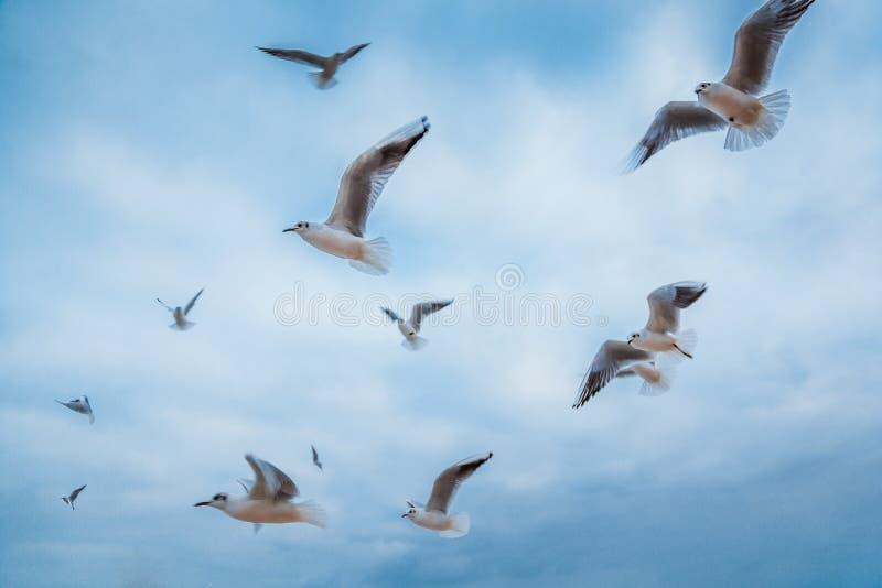 El volar de las gaviotas imagen de archivo
