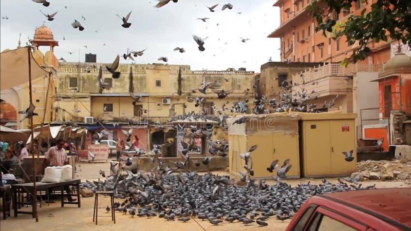 El volar de las palomas almacen de video