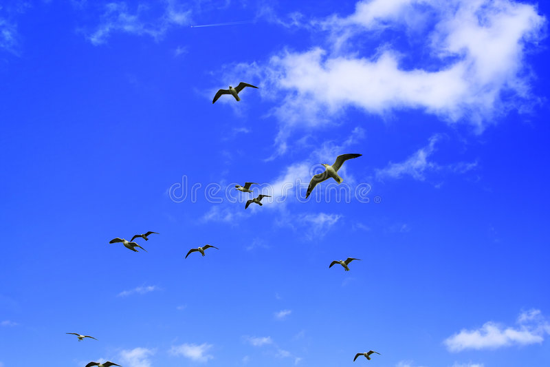 El volar de los pájaros de la playa foto de archivo libre de regalías
