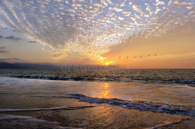 El volar de los pájaros de la puesta del sol imagen de archivo libre de regalías