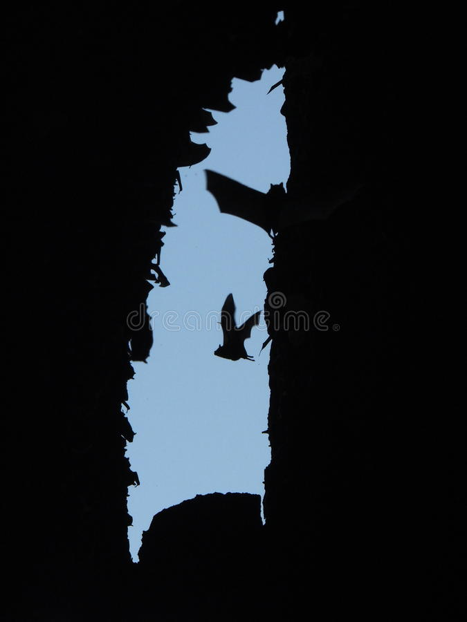 El volar en la cueva del palo fotografía de archivo