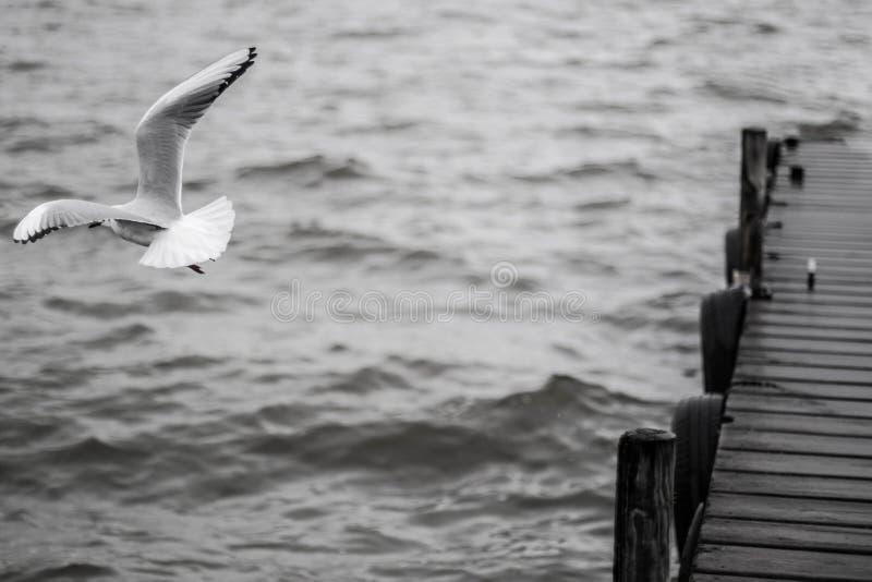El volar libremente alrededor del mar fotografía de archivo