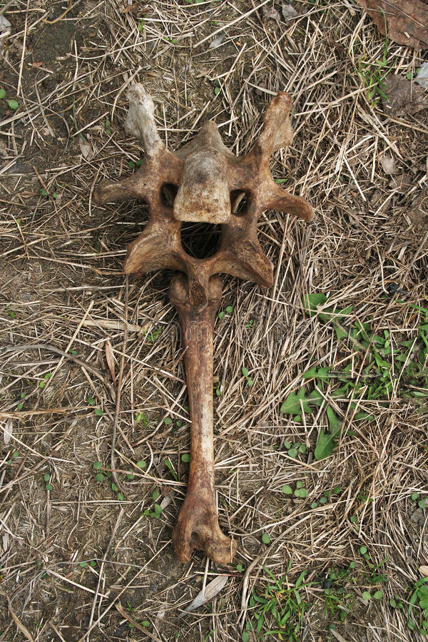 El vudú equipa los huesos en forma de la criatura fotografía de archivo