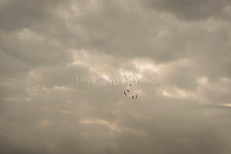 El vuelo crepuscular jpg foto de archivo libre de regalías