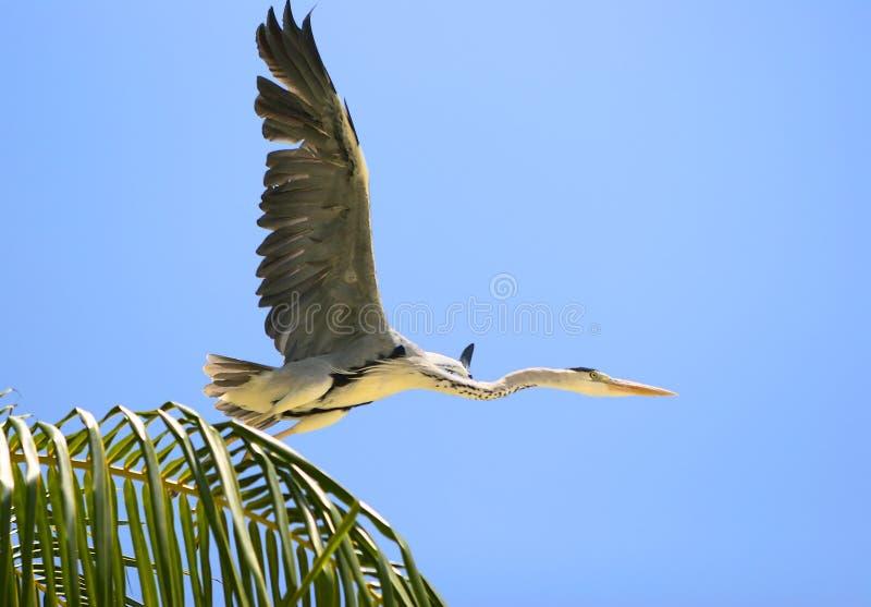 El vuelo del pájaro foto de archivo libre de regalías